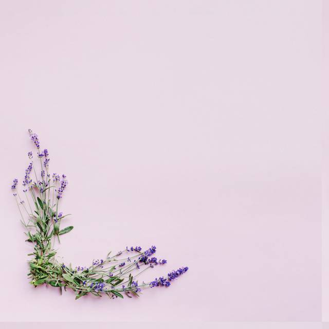 bunch-of-delicate-lavender-flowers-forming-frame-on-pink-background