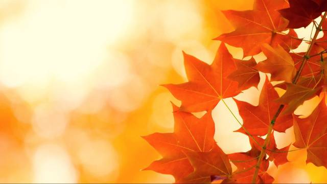 autumn_leaves_brightness_